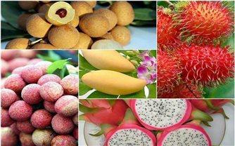 EU - Thị trường tiềm năng xuất khẩu rau quả