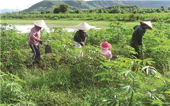 Huyện Vĩnh Thạnh (Bình Định): Dân mỏi mòn chờ sổ đỏ