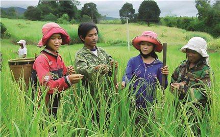 Xem Hộ nghèo là đối tác để phát triển: Tạo đột phá trong giảm nghèo bền vững