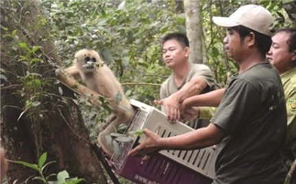 Nạn buôn bán động vật hoang dã chưa giảm nhiệt