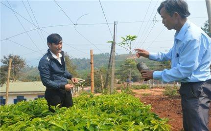 Các HTX trên địa bàn tỉnh Quảng Trị: Tạo bệ đỡ cho nông dân phát triển sản xuất