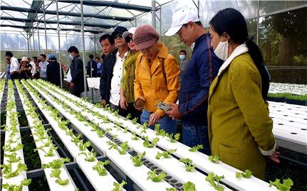 Tìm giải pháp nâng cao chuỗi giá trị cung ứng rau, hoa, quả