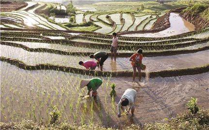 Yên Bái: Sản xuất nông nghiệp đi đôi với phòng, chống dịch