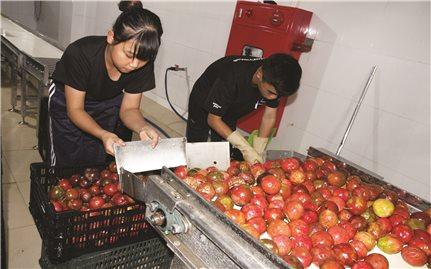 Đẩy mạnh công nghệ chế biến: Hướng tiêu thụ ổn định cho nông sản Việt