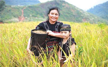 Cây lúa rẫy và lễ Ada của người Pa Kô ở Quảng Trị