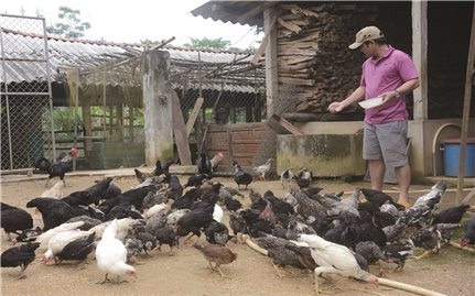 """Mô hình """"Không còn nạn đói"""" ở Quảng Ngãi"""