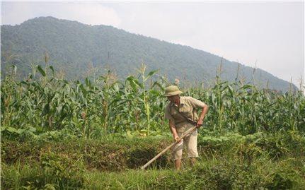 Xây dựng NTM gắn với giảm nghèo bền vững ở vùng DTTS và miền núi: Cần điều chỉnh một số tiêu chí cho phù hợp