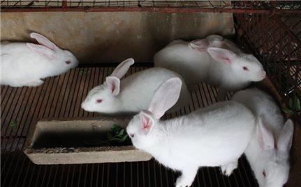 Kỹ thuật nuôi thỏ thịt tại nhà