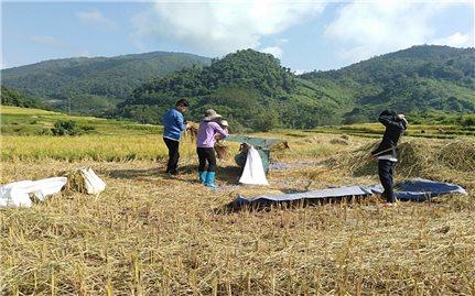 Lai Châu: Tạo sinh kế cho người dân thoát nghèo