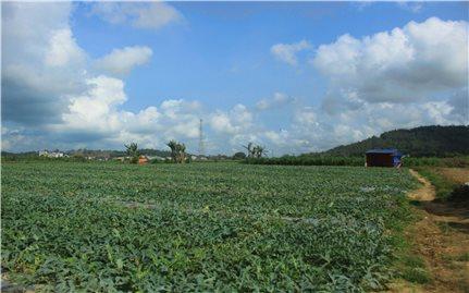 Bình Định: Doanh nghiệp sử dụng đất sai mục đích sao không xử lý?