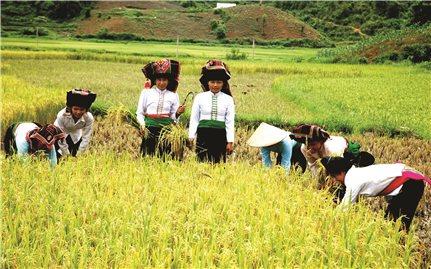 """Nông nghiệp Việt Nam """"biến nguy thành cơ…"""""""