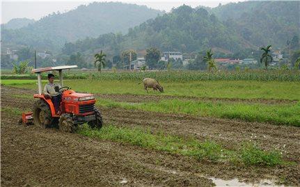 Lào Cai: Nông dân phấn khởi xuống đồng, hứa hẹn vụ xuân năng suất