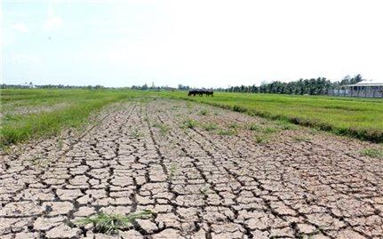 Từ ngày 11/3, xâm nhập mặn ở các sông Vàm Cỏ, cửa sông Cửu Long tăng cao