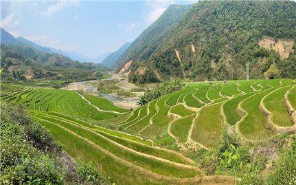 Vẻ đẹp ruộng bậc thang mùa mạ non nơi biên giới Lai Châu