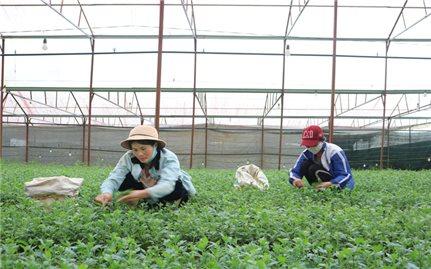 Lâm Hà (Lâm Đồng): Phát huy hiệu quả nguồn vốn Chương trình 135