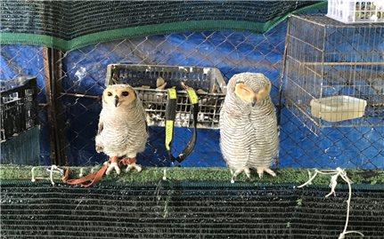 Tây Ninh: Tịch thu 9 cá thể chim hoang dã nuôi nhốt tại nhà riêng
