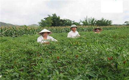 Ban Dân tộc Lạng Sơn: Kiểm tra, giám sát việc triển khai các chính sách dân tộc tại cơ sở