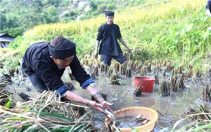 Sản xuất nông nghiệp và tín ngưỡng của người La Chí