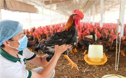 Giảm 50% mức thu phí và lệ phí trong lĩnh vực thú y