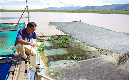 Hiệu quả từ mô hình nuôi ếch ở xã Ya Ly