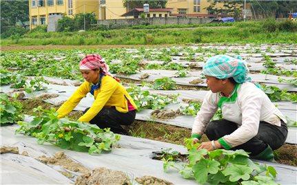 Lào Cai sau 30 năm tái lập tỉnh: Nhiều đổi thay trong đời sống đồng bào các DTTS