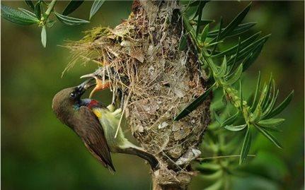 Ngắm khu dự trữ sinh quyển thế giới ở Việt Nam mới được UNESCO công nhận