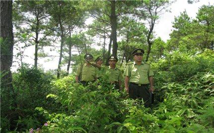 Phát triển cây dược liệu ở Nghệ An