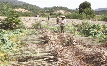 Bóc tách đất giao cho hộ đồng bào DTTS ở Khánh Hòa: Còn nhiều bất cập