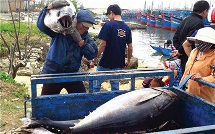 Ngư dân Phú Yên phấn khởi với chuyến đi biển đầu năm