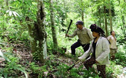 Quyền lợi người trồng rừng nhìn từ Chương trình 327, 661
