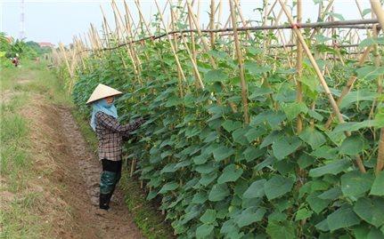 Phương pháp chữa bệnh đốm phấn cho cây dưa leo