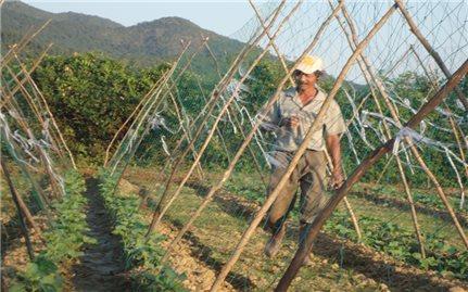Đa dạng các mô hình kinh tế giúp người dân thoát nghèo