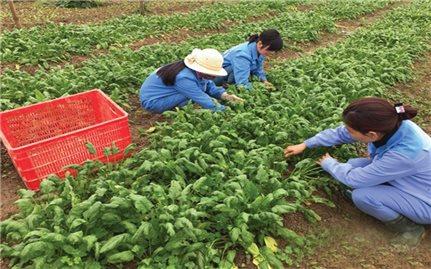 Tổ chức JICA với lĩnh vực nông nghiệp ở Nghệ An