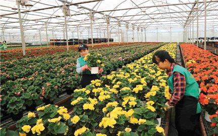 Hà Lan hỗ trợ Lâm Đồng phát triển nông nghiệp bền vững