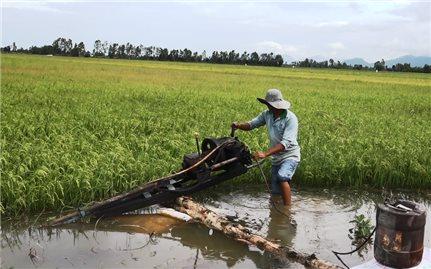 Kiên Giang: Nông dân lao đao vì nước lũ về sớm