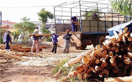 """Trồng cây gỗ lớn: """"Cái khó bó cái khôn"""""""