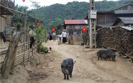 Cảnh giác với dịch bệnh tả lợn