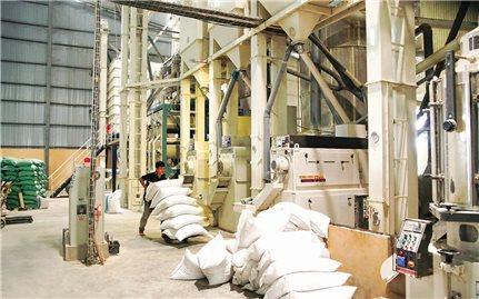 Cần định vị thương hiệu Gạo Việt Nam trên thị trường quốc tế
