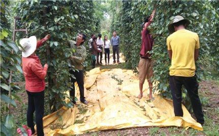 Bình Phước: Công tác dân tộc thúc đẩy phát triển vùng đồng bào DTTS