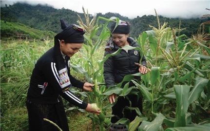 Hiệu quả chính sách dân tộc giúp huyện nghèo phát triển