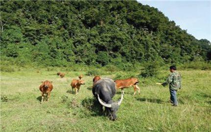 Nghệ An: Đất dự án bỏ hoang, người dân lại thiếu đất sản xuất