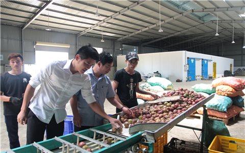 Công nghiệp chế biến không theo kịp sản lượng nông sản: Điểm nghẽn từ chính sách thu hút đầu tư