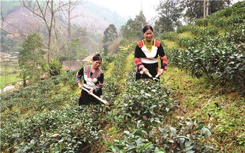 Tuyên Quang: Thực hiện hiệu quả chính sách dân tộc