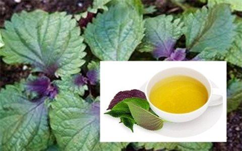 Những cây thuốc trong vườn nhà chữa bệnh hiệu quả