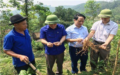 Tạo điều kiện để môi trường rừng thành không gian phát triển kinh tế