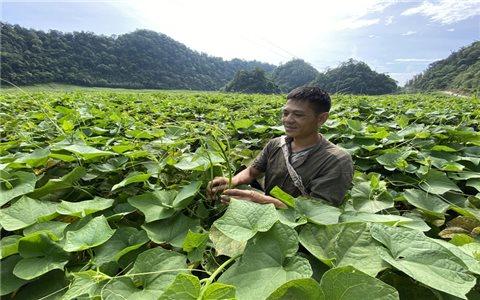 Hòa Bình: Những mô hình thoát nghèo bền vững