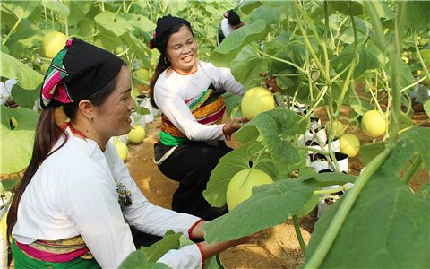 """Bất cập trong các dự án hỗ trợ giống cây trồng, vật nuôi: Cần phải trao """"cần câu"""" cho người dân (Bài 2)"""