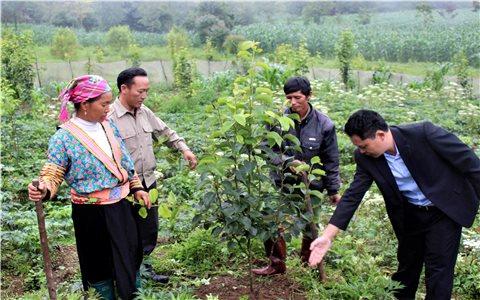 Bất cập trong các dự án hỗ trợ giống cây trồng - Chuyện cũ nói lại (Bài 1)