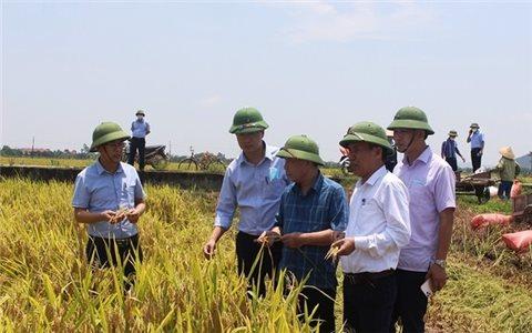 Trung Bộ thắng lợi vụ xuân - Tin vui của nông dân trong bối cảnh đại dịch Covid-19