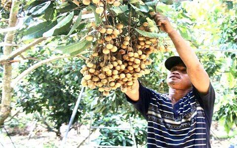Đồng Tháp, Sóc Trăng: Đẩy mạnh tiêu thụ sản phẩm OCOP cho nông dân